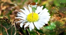 flower-701218_1280